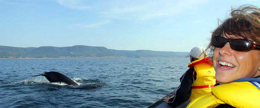 zodiak inflatable boat whale watching cape breton