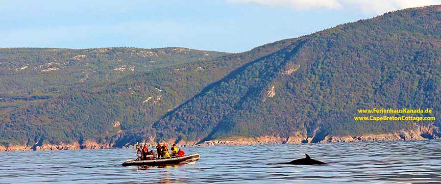 Whale Watching at Cape Breton